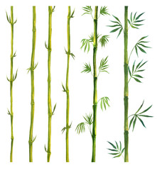 Green Bamboo painted in watercolor in oriental style