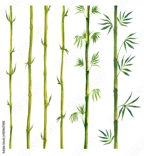 Fototapeta Green Bamboo painted in watercolor in oriental style