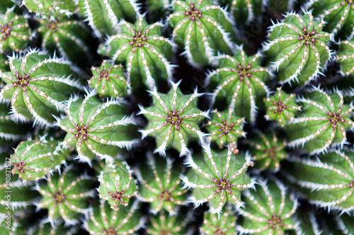 Foto Spatwand Arizona Cactus