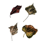 Leaves, watercolor, can be used as greeting card, invitation card for wedding, birthday and other holiday and  summer background - 180874763