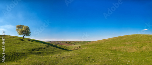 Plexiglas Lente Panoramic view of alone blossoming tree in a spring field