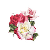 Bouquet of roses, watercolor, can be used as greeting card, invitation card for wedding, birthday and other holiday and  summer background. - 180875993