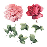Roses and leaves, watercolor, can be used as greeting card, invitation card for wedding, birthday and other holiday and  summer background - 180877704