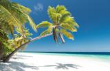 Palme am Strand - 180889908
