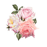 Bouquet of roses, watercolor, can be used as greeting card, invitation card for wedding, birthday and other holiday and  summer background. - 180891143