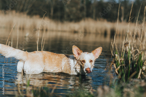 Bathing Dog плакат