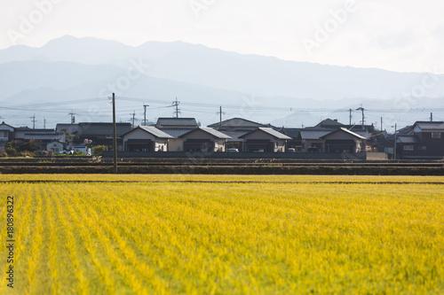 Foto op Canvas Wit Reisfelder in Japan