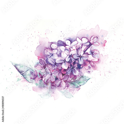 Watercolor spring lilac flower
