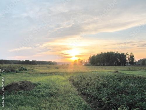 Foto op Plexiglas Khaki potato field in summer at sunset