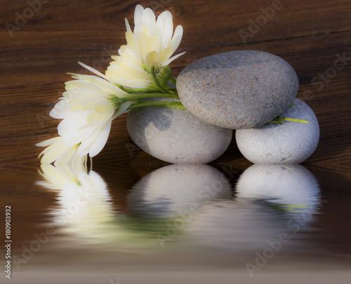 Foto Murales flores y piedras redondas