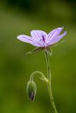 Flower - 180910559