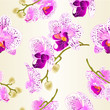 Seamless texture beautiful purple and white Orchid Phalaenopsis flower  vintage vector closeup illustration editable hand draw
