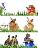 spring animals in grass - spring banners - 180914553