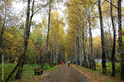Papiers peints Moscou Birch Alley in the Park in Autumn