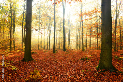 Foto op Canvas Herfst Morning in the forest
