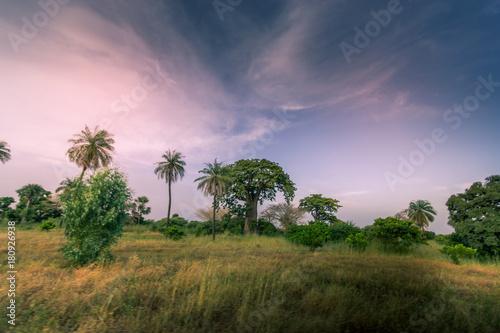 Fotobehang Lichtroze Baobab du Sénégal