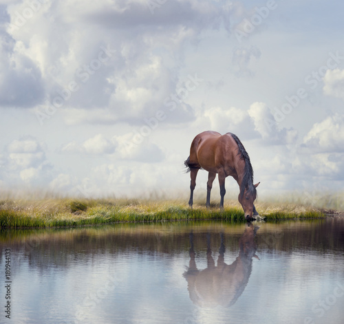 Brown horse near water - 180944133