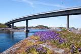 Violets in front of the Vevang bridge on the Atlantic ocean road in Norway