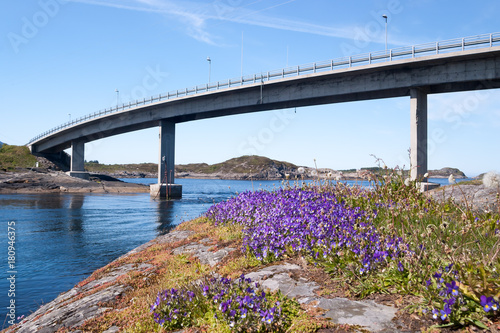 Violets in front of the Vevang bridge on the Atlantic ocean road in Norway