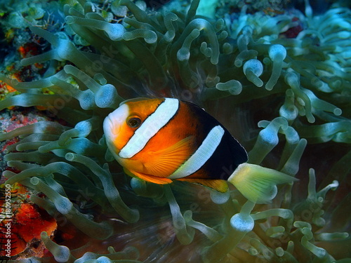 Fish-clown Poster