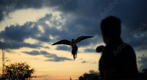 Plexiglas Papegaai Silhouette parrot flying to a man's hand at sunset