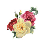 Bouquet of roses, watercolor, can be used as greeting card, invitation card for wedding, birthday and other holiday and  summer background. - 180967930