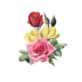 Bouquet of roses, watercolor, can be used as greeting card, invitation card for wedding, birthday and other holiday and  summer background. - 180967999