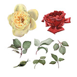 Roses, watercolor, can be used as greeting card, invitation card for wedding, birthday and other holiday and  summer background - 180968153