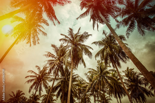 Foto Murales Branches of coconut palms under blue sky - vintage retro style