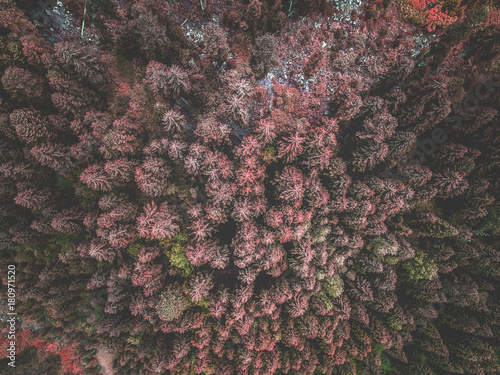Wall mural Aerial view of red spruce forest. Tops of fir tree. View from above.