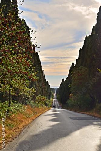 Fototapeta il famoso Viale dei Cipressi a Bolgheri, Castagneto Carducci in Toscana