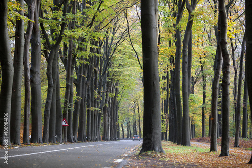car on road in autumnal forset near austerlitz on utrechtse heuvelrug in holland