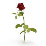 Single beautiful red rose isolated on white. 3D illustration