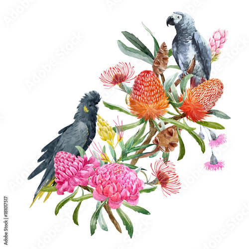 Watercolor banksia flower vector composition - 181017517