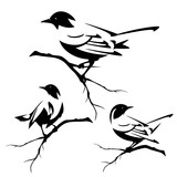 small birds sitting on tree branches - black and white vector design set