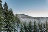 Waldlandschaft im Winter mit Schnee