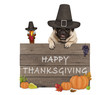 funny turkey and pug dog wearing pilgrim hat for Thanksgiving day and wooden sign with text happy thanksgiving, isolated on white background