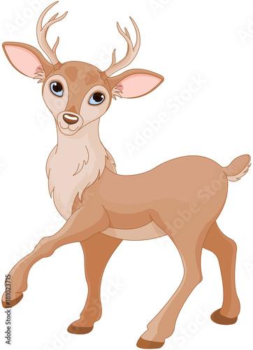 Foto op Aluminium Sprookjeswereld Cute Deer