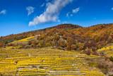 Weinanbau am Hügel mit Terrassen