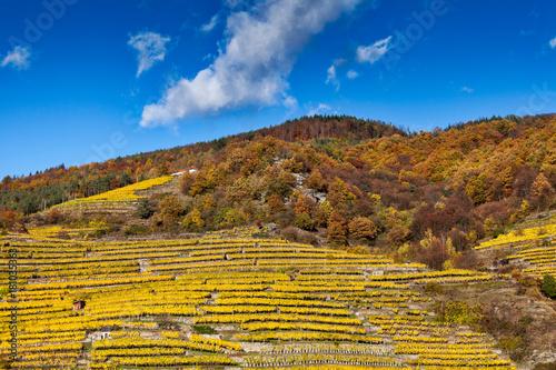 Plexiglas Wijngaard Weinanbau am Hügel mit Terrassen