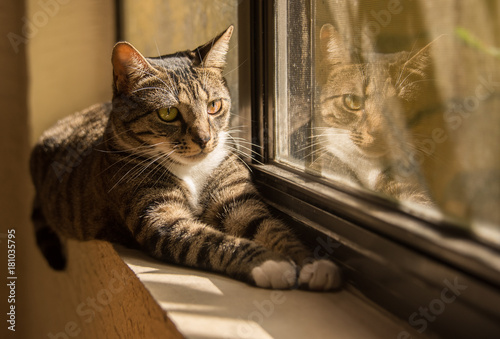 Plexiglas Kat Cat And Her Reflection By Window