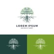 tree and root logo vector leaf