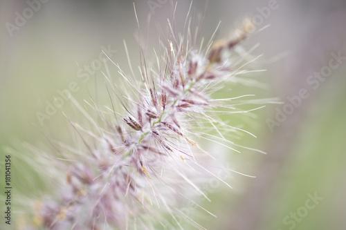 Blüte © ok-foto