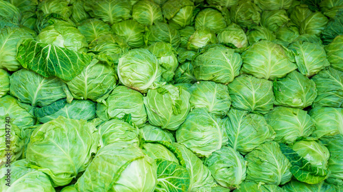 In de dag Brussel cabbage from field. cabbage background