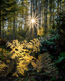 forest morning sunbeams - 181048999