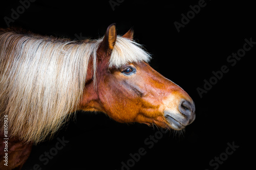 Plexiglas Paarden portraits of horses on a black background without ammunition
