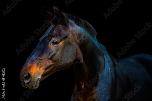 portraits of horses on a black background without ammunition