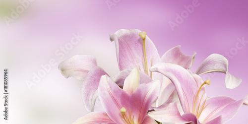lily garden flower Poster