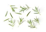 Rosemary isolated on white background - 181098515
