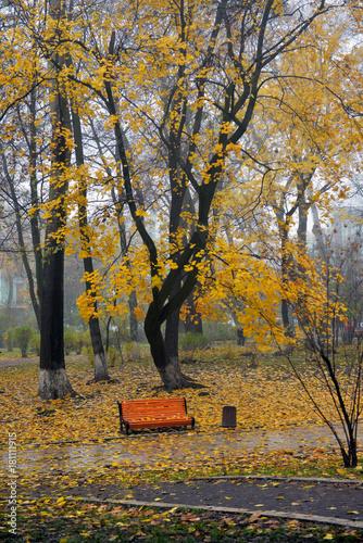 Papiers peints Bosquet de bouleaux Colorful autumn trees with yellowed foliage in the autumn park.